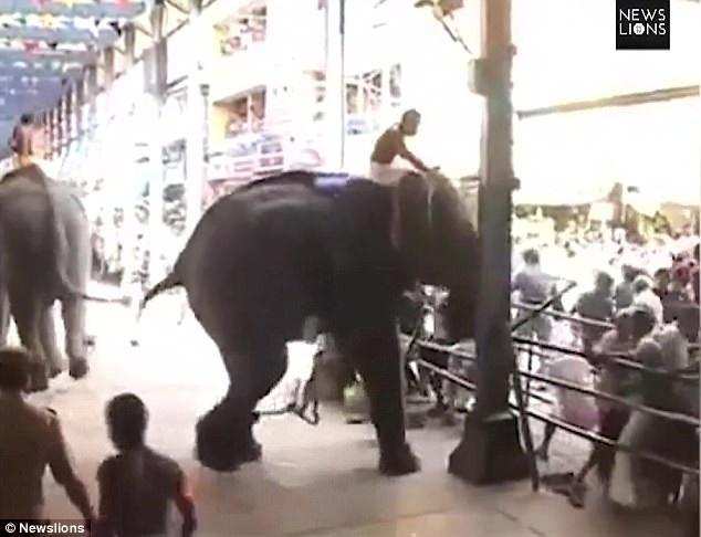 Đoạn video clip ghi lại khoảnh khắc những con voi bất ngờ trở nên giận dữ tại một lễ hội tổ chức ở Ấn Độ, chúng quay ra tấn công những người dự lễ, khiến một người đàn ông thiệt mạng, 12 người khác bị thương.