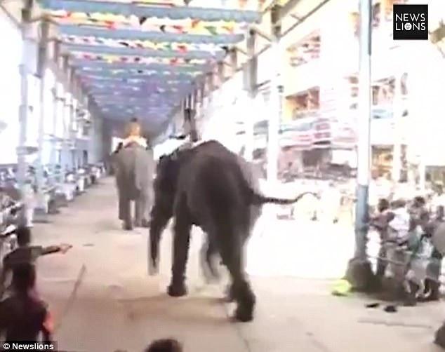 Đoạn video clip ngắn ghi lại tại hiện trường cho thấy một trong những con voi đã chạy về phía đám đông và có ý định tấn công.