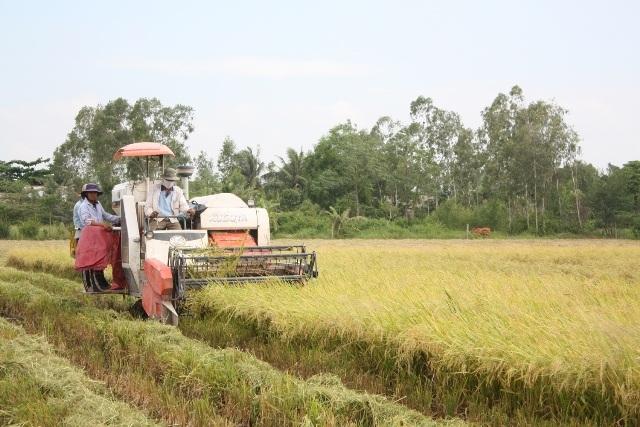 Nông dân vùng Đồng bằng sông Cửu Long thu hoạch lúa đông xuân