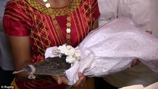 Cô dâu cá sấu được mặc váy trắng và bị kẹp mõm