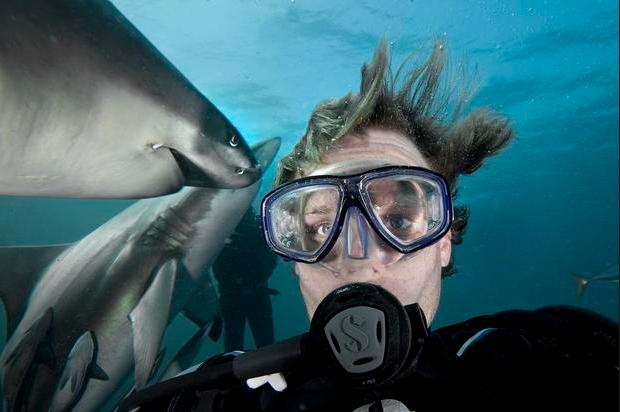 """Thợ lặn Aeron Gekoski chụp ảnh """"tự sướng"""" cùng những con cá mập dưới đáy biển. (Ảnh: Aeron Gekoski)"""