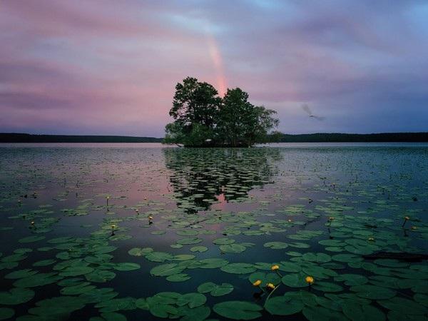 """Nhiếp ảnh gia Aaron Sandberg (Mỹ) đã giành chiến thắng ở hạng mục """"Tự nhiên"""" với bức ảnh chụp tại Thụy Điển. Bức ảnh được chụp bằng iPhone 6S."""