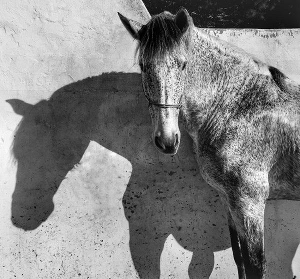 """Bức ảnh do nữ nhiếp ảnh gia Francesca Tonegutti chụp bằng iPhone 6 đã giành giải nhất trong hạng mục """"Động vật""""."""