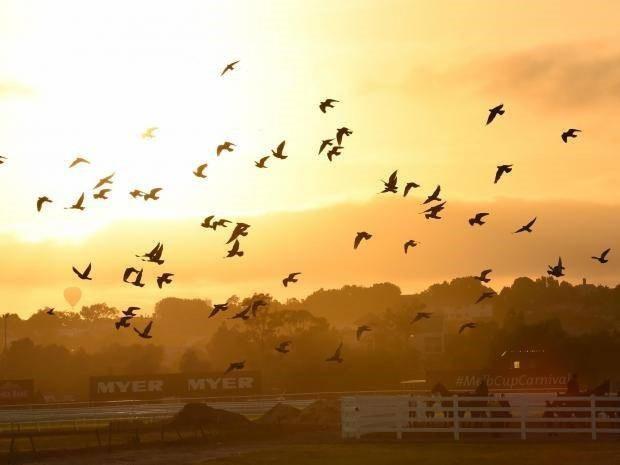 Loài chim bồ câu đi từ năm tỷ con đến tuyệt chủng trong vài thập kỷ - 1