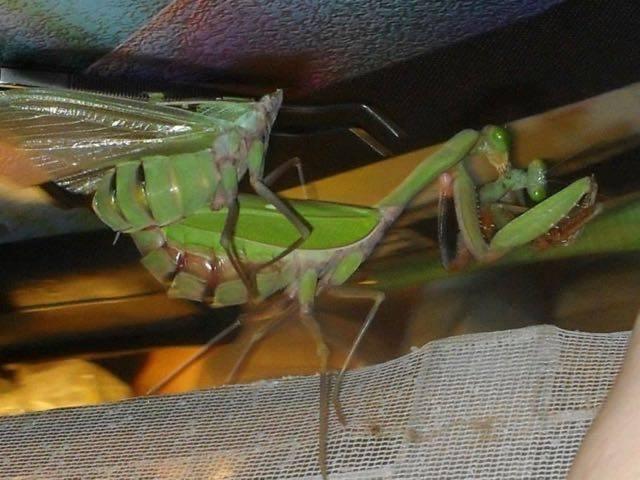 Đời sống tình dục phức tạp của một số loài sâu bọ - 3