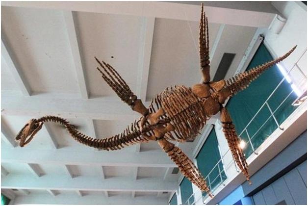 Trong một nghiên cứu mới được công bố trên tạp chí the journal Current Biology, các nhà khoa học đã tìm thấy một nhánh bò sát biển mới tuyệt chủng (pliosaur), được bảo quản đặc biệt tốt và nhận được nhiều đánh giá cao từ kỷ Phấn trắng ở Nga (khoảng 130 triệu năm trước). (Ảnh: Reuters)