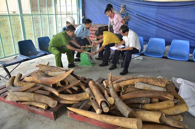 Một vụ vận chuyển ngà voi số lượng lớn bị cơ quan chức năng TPHCM phát hiện, bắt giữ (Ảnh: Đình Thảo).