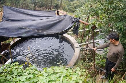 Bể cá dùng mái che để tránh mưa, nắng và lá cây rừng rụng vào, vòi nước tuần hoàn liên tục để tạo oxy cho cá.