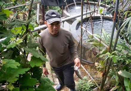 Hàng ngày ông Tạ xuống thăm trại cá 2 lần, vừa để chăn cá, vừa để kiểm tra cá và lượng nước. Ông vớt những con cá chết để tránh lây lan ra cả đàn.