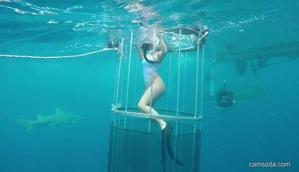 Nữ người mẫu Molly vẫn bị cá mập tấn công dù bơi trong lồng sắt