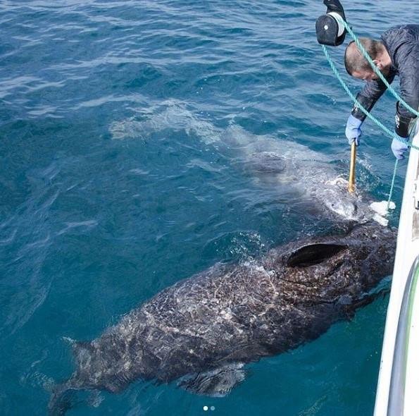 Cá mập Greeland sống ở vùng nước lạnh từ - 1 độ C đến 10 độ C, và có thể bơi ở độ sâu 2,2 ki-lô-mét.