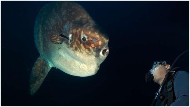 Phát hiện loài cá mặt trăng khổng lồ mới sau 4 năm tìm kiếm - 1