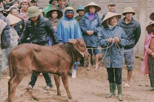 Bà con Quảng Bình phấn khởi nhận bò từ Phan Anh và nhóm từ thiện.