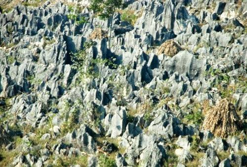 Những bãi đá nhọn là cảnh quan đặc trưng của cao nguyên đá Đồng Văn