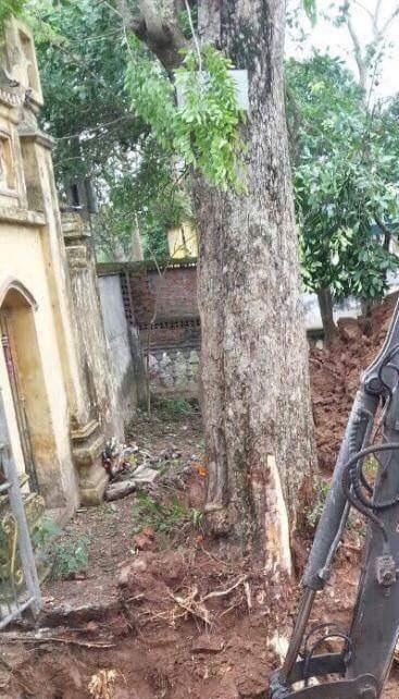 Ngày 25/3, cây sưa200 năm tuổi ở đình làng Đông Cốc đã được chặt hạ và chuyển giao xong cho ông Nguyễn Văn Hùy (Đồng Kỵ, huyện Từ Sơn, Bắc Ninh).