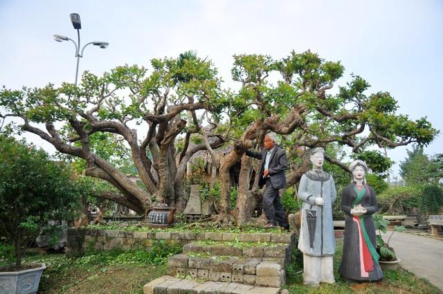 """""""Siêu cây"""" trâm vối của ông Nguyễn Văn Ngọ (63 tuổi, Thạch Thất, Hà Nội) từng gây xôn xao dư luận khi được định giá lên tới 10 tỷ đồng. Cây có tuổi đời vài trăm năm, thân cây uốn lượn với 19 nhánh tựa như những con rồng đang bay lên khỏi mặt đất."""