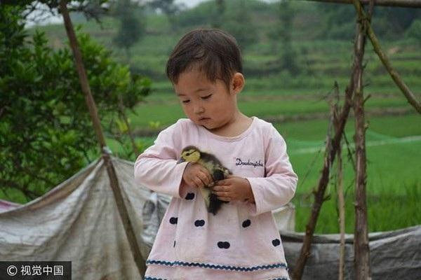 Không có ai chơi cùng, cô bé Zhang Lei chơi đùa cùng chó và vịt con