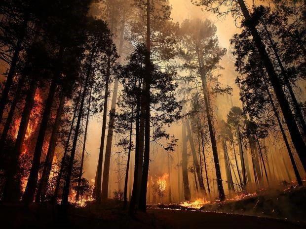 Sự ấm lên toàn cầu có thể ngăn không cho rừng tái sinh sau khi cháy rừng - 1