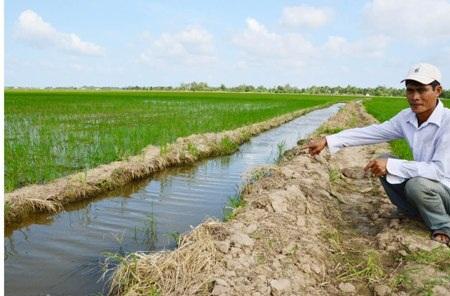 Sóc Trăng: Người chặn đứng dòng nước tưới lúa của nông dân thua kiện! - 1