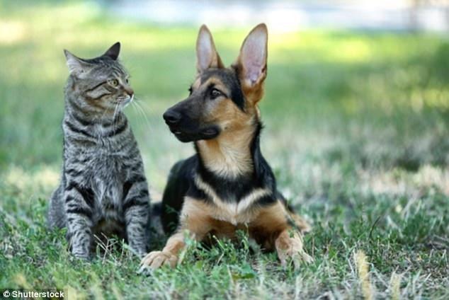 Chó và mèo loài nào thông minh hơn? - 1