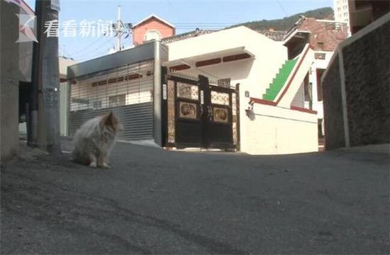 Chú chó ngồi ở góc đường mỗi ngày suốt 3 năm qua để chờ chủ mình trở về