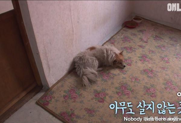 Hàng đêm chú chó quay trở về căn hộ đã bị bỏ hoang của chủ để ngủ trước khi quay trở lại góc đường để chờ chủ vào ngày hôm sau