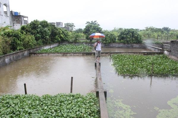 Khu trang trại chăn nuôi cả vườn rộng gần 1000m2 của ông Phạm Ngọc Bào ở xã Vũ Lăng, Tiền Hải, Thái Bình
