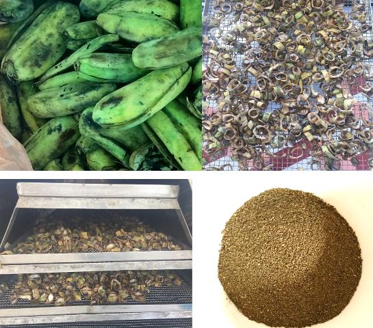 2 em cho biết để nghiên cứu được ra sản phẩm hữu ích từ vỏ chuối xanh phải tra qua rất nhiều công đoạn