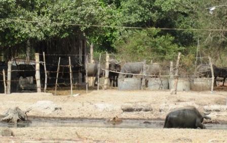 Sau hơn 10 năm triển khai, khu vực công viên Sài Gòn safari vẫn chỉ là đồng hoang