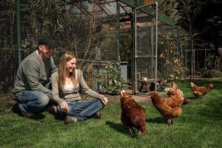 Hiện tại, Lizzie và Ky đang nuôi khoảng 48 con gà mái