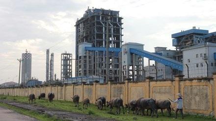 Nhà máy Đạm Ninh Bình liên tiếp lỗ và hiện đang trong tình trạng sống dở chết dở.