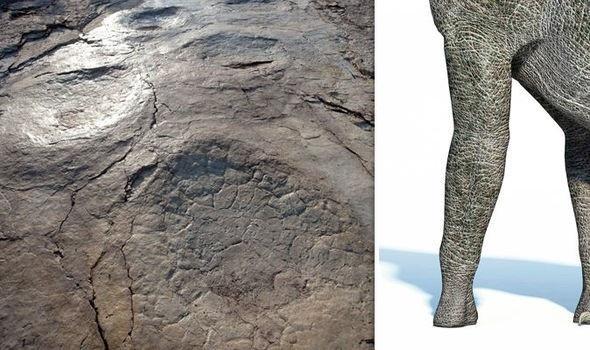 Loài khủng long sấm sét tạo ra dấu chân lớn nhất từng được tìm thấy trên thế giới: nặng 35 tấn