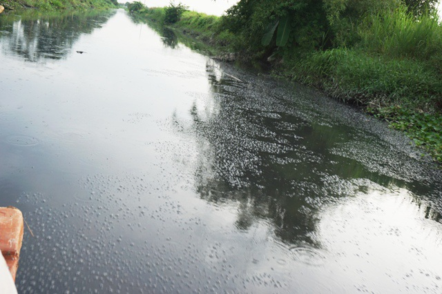 Nước kênh đen như mực.