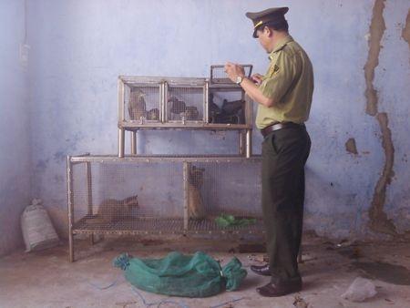 Lực lượng chức năng kiểm tra và phát hiện nhiều động vật hoang dã tại một quán nhậu cách đây mấy năm