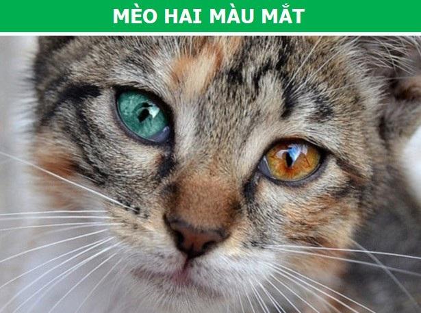 """Những động vật có màu sắc """"cực dị"""" do đột biến gen - 8"""