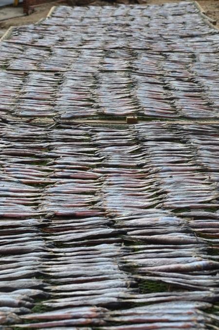 Tết về ghé thăm những làng khô cá biển nổi tiếng miền Tây - 3