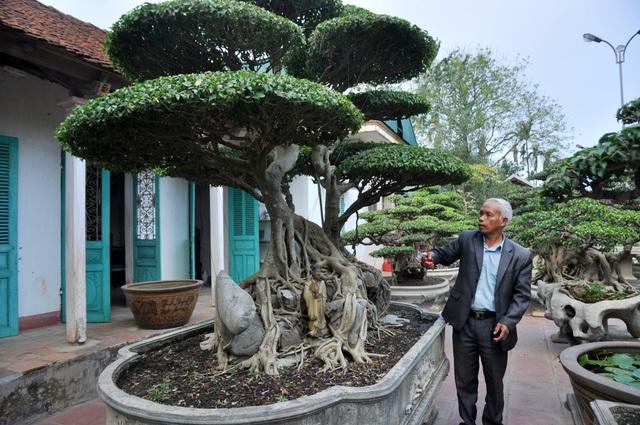 """Ngoài cây Trâm vối, trong vườn cây nhà ông Ngọ còn có cây sanh nổi bật bởi dáng """"song long thập toàn"""" với tuổi đời lên tới hơn 100 năm tuổi, có giá vào khoảng 3 tỷ đồng. Đây là một trong những cây được ông Ngọ coi là bảo bối trong vườn nhà mình."""