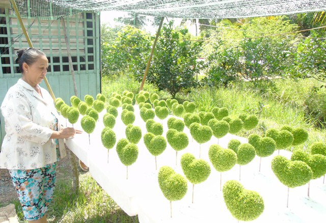 Bà Oanh cho biết mỗi ngày phải đem cỏ ra phơi nắng khoảng 1h đồng đồ