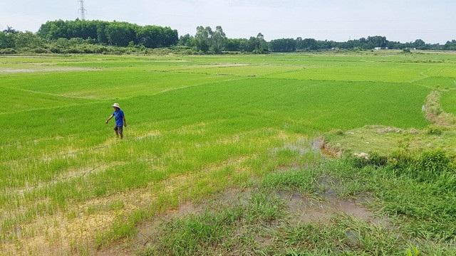 Dự án Cơ sở giết mổ gia súc, gia cầm tập trung phía Bắc tỉnh Thừa Thiên Huế tại thôn Bồn Trì, phường Hương An, Thị xã Hương Trà ở khu vực ruộng lúa trong ảnh đã được chấm dứt