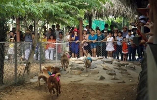 Trò chơi đua chó ở vườn du lịch Mỹ Khánh