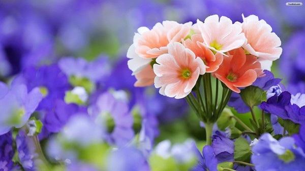"""Bộ sưu tập hình nền """"sắc hoa"""" tuyệt đẹp mừng ngày Phụ nữ Việt Nam 20/10 - 2"""