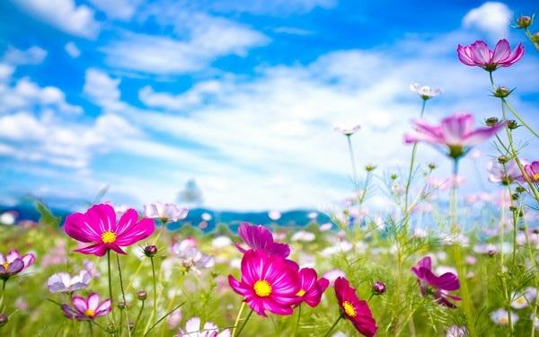 """Bộ sưu tập hình nền """"sắc hoa"""" tuyệt đẹp mừng ngày Phụ nữ Việt Nam 20/10 - 3"""