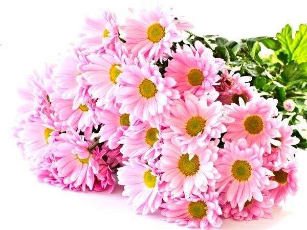 """Bộ sưu tập hình nền """"sắc hoa"""" tuyệt đẹp mừng ngày Phụ nữ Việt Nam 20/10 - 4"""