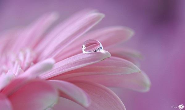 """Bộ sưu tập hình nền """"sắc hoa"""" tuyệt đẹp mừng ngày Phụ nữ Việt Nam 20/10 - 5"""