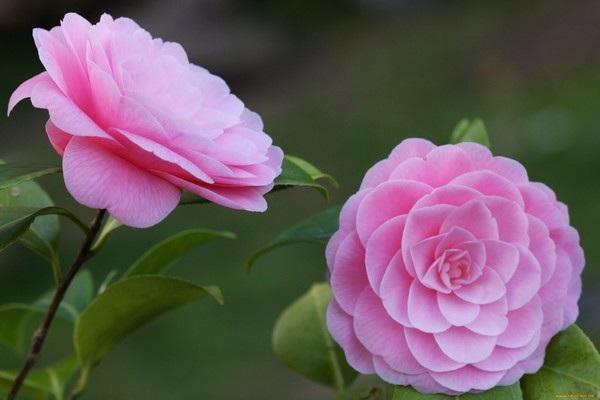 """Bộ sưu tập hình nền """"sắc hoa"""" tuyệt đẹp mừng ngày Phụ nữ Việt Nam 20/10 - 6"""