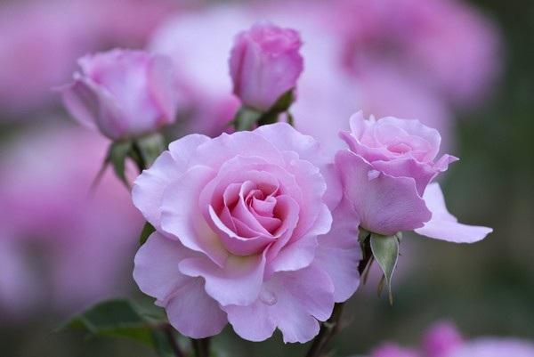 """Bộ sưu tập hình nền """"sắc hoa"""" tuyệt đẹp mừng ngày Phụ nữ Việt Nam 20/10 - 7"""
