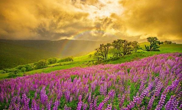 """Bộ sưu tập hình nền """"sắc hoa"""" tuyệt đẹp mừng ngày Phụ nữ Việt Nam 20/10 - 10"""