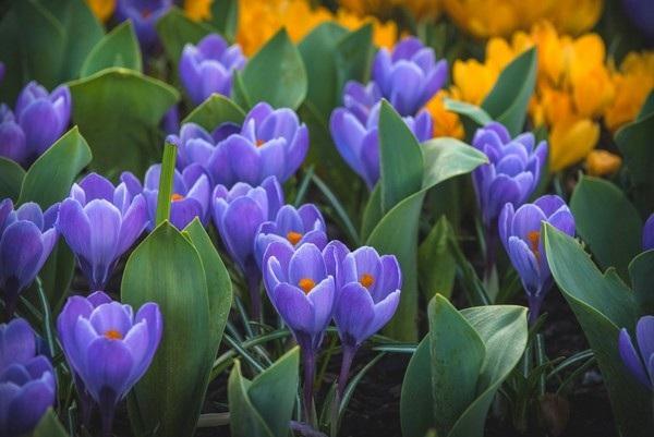 """Bộ sưu tập hình nền """"sắc hoa"""" tuyệt đẹp mừng ngày Phụ nữ Việt Nam 20/10 - 11"""