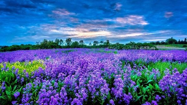 """Bộ sưu tập hình nền """"sắc hoa"""" tuyệt đẹp mừng ngày Phụ nữ Việt Nam 20/10 - 12"""