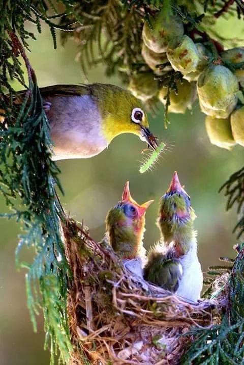 """Bảo vệ con thái quá: Bố mẹ biến con thành """"cây trồng trong nhà kính"""" - 1"""